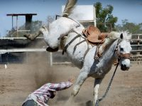 action-animal-bronco-bucking-33251